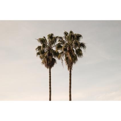 Venice CA Horizontal