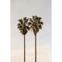 Venice CA Vertical